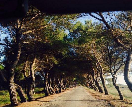 Pylli i vdekjes në Fier, të vërtetat që fshihen aty (Foto)