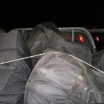 Po transportonin 188 kg marijuanë, policia greke prangos dy shqiptarët