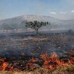 Policia e Sarandës vë në pranga piromanët, dogjën tokë bujqësore dhe pyje