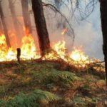 Zjarr i madh në fshatrat e Tepelenës, rrezikohen banesat (VIDEO)