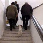 Pas derrave, në spitalin e Gjirokastrës futen edhe qentë (FOTO)