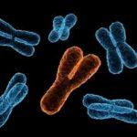 Kromozomi Y po zhduket: Çfarë do të ndodhë me meshkujt?