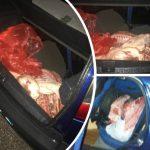 Kapet tregtari nga Lazarati, fuste ilegalisht mish derri të pakontrolluar nga Greqia (FOTO)