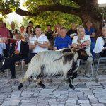 Kush është cjapi më i bukur i Kurveleshit?! Organizohet PAN-i Fest në Nivicë të Tepelenës (FOTO)