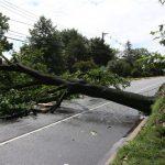 Moti i keq, probleme edhe në qarkun Gjirokastër. Pemë të rrëzuara në rrugën Përmet-Këlcyrë