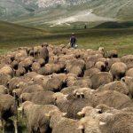 Greqi, gjendet i vdekur bariu shqiptar. Policia dyshon për…