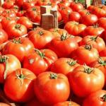 Bllokohen në Athinë 5 tonë domate me kimikate. Ishin blerë nga Shqipëria