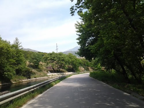 Shoferi përplas me makinë një lopë në Bistricë, policia e shpall në kërkim