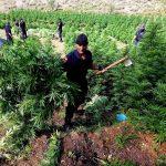 Fatmir Xhafaj: Lazarati fuqizoi më shumë grupet kriminale, 900 tonë hashash dolën jashtë vendit për 4 vjet të Berishës