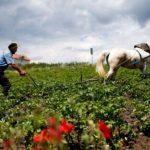 Shqipëria rurale, ja sa të punësuar në bujqësi ka Gjirokastra