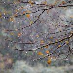 Moti për sot, pasditja rikthen reshjet e shiut