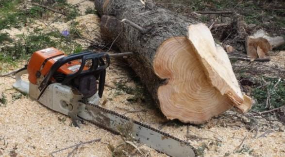 Prerja e pyjeve, burri nga Dropulli përfundon në Prokurorinë e Gjirokastrës