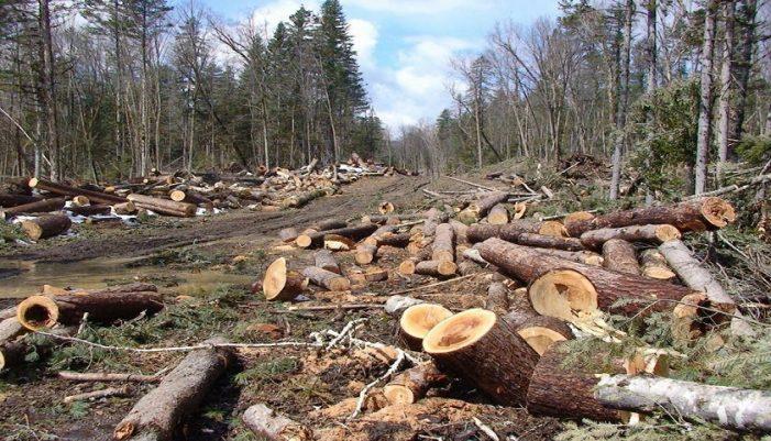Vijon prerja e paligjshme e pyjeve në Zagori, sot u konstatua një tjetër rast në Sheper