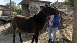 Histori e pazakontë nga Gjirokastra, i humb mushka në Fushë Bardhë, e gjen pas 4 vitesh në Facebook (VIDEO)