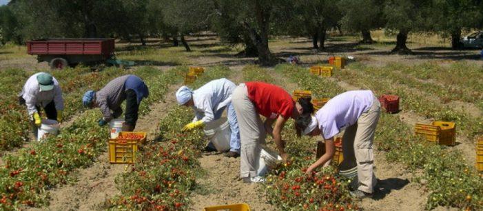 Hapen dyert e punësimit për shqiptarët në Itali, ja si mund të përfitoni