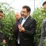 Ministri Çuçi brenda në serrë duke provuar domatet: 100 % të sigurta dhe të shijshme. S'kanë lidhje as me gjilpërat apo hormonet që ju thonë (FOTO)