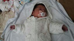 Foshnja lind në autobus, udhëtime falas deri 18 vjeç