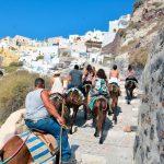 Do të shkoni me pushime në Santorini? Mendoni edhe për gomarin…