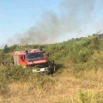 Zjarr i madh, digjen disa hektarë me ullishte